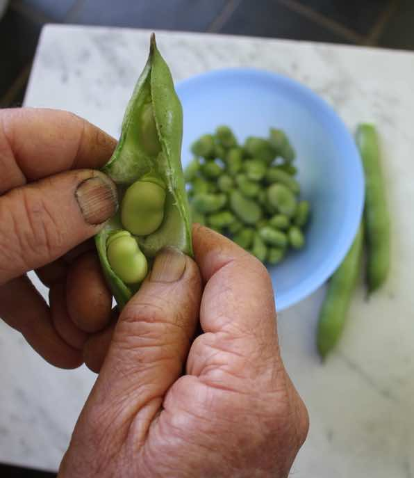 You will get black fingernails whilst reaping and opening the pods of the broad beans you have planted.