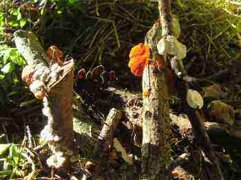 Build a compost pile that has many fungi.