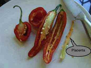 Chili pips and placenta