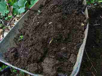 Compost made from rotting sticks.
