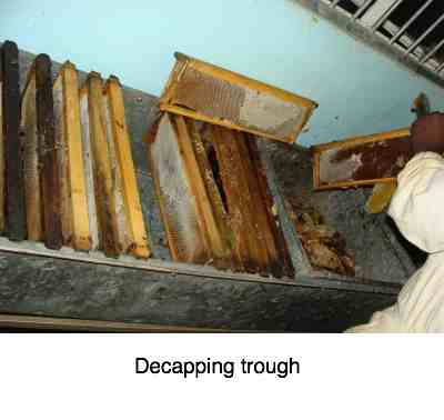 A decapping trough is something you'll need once you're over ten beehives.