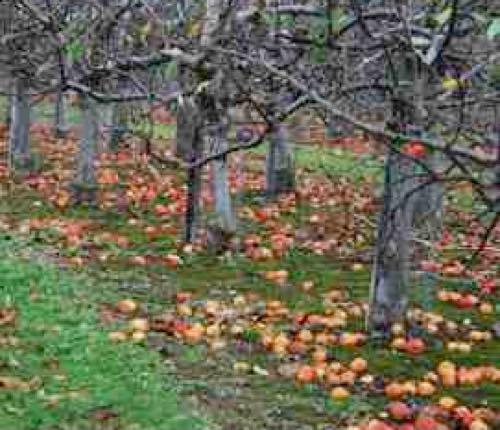 end apple waste