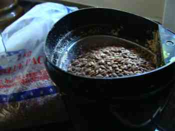 Photograph of flax seed in a coffee grinder.