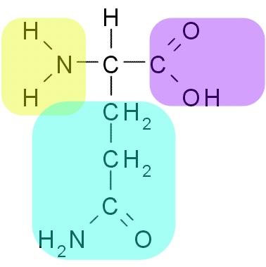 Glutamine structure R
