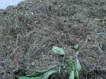 Grass cuttings compost