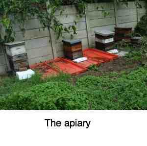 Honey bee apiary