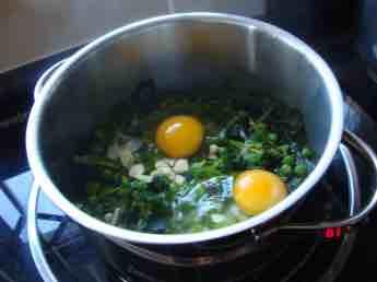 Planting broccoli for eggs Florentine