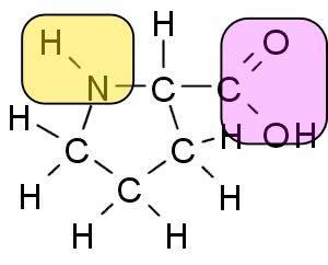 Proline structure.