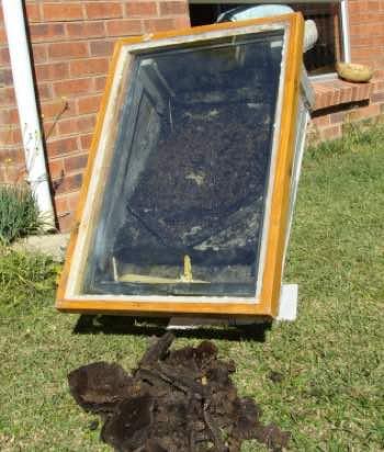Solar beeswax extractor