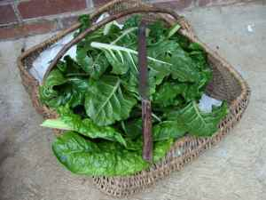 Spinach benefits in a basket.