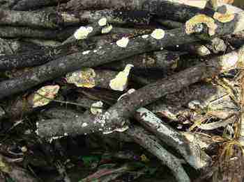 Starting a compost heap that is friendly towards fungi.