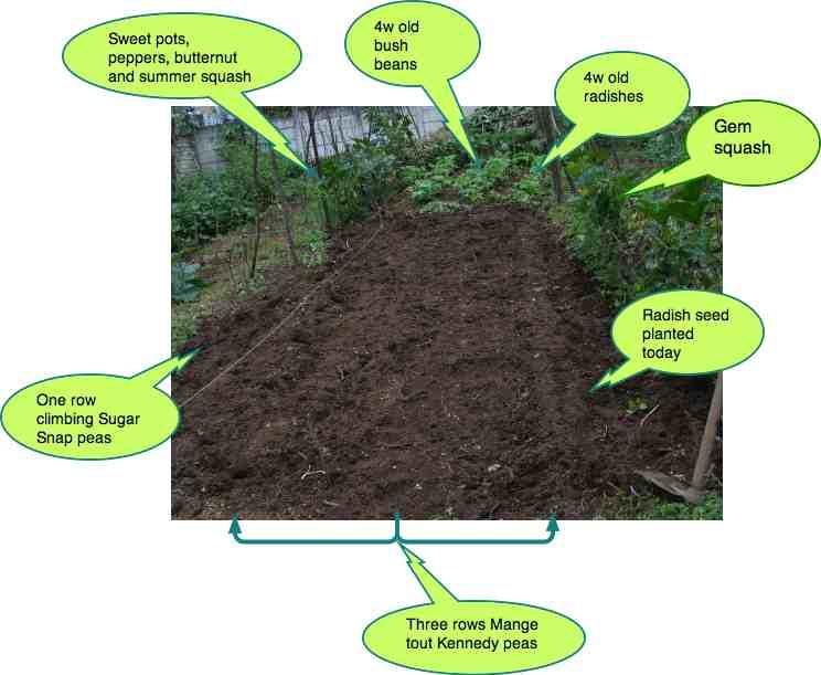 Starting a vegetable garden.