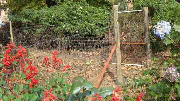Vegetable garden fences are a must if you have chickens in the garden.
