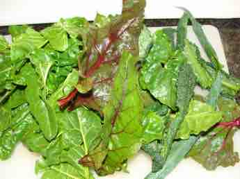 Swiss chard mixed greens is Preston's salad lunch.