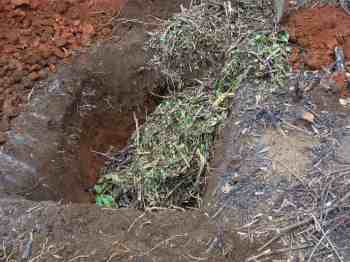 Plenty of rough compost before planting your tree.