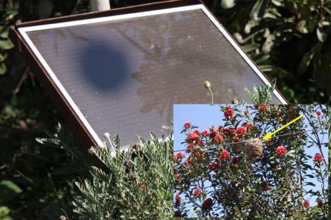Weaver's nest shadow