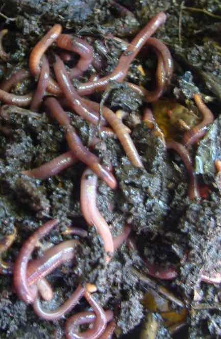 What is a worm farm?