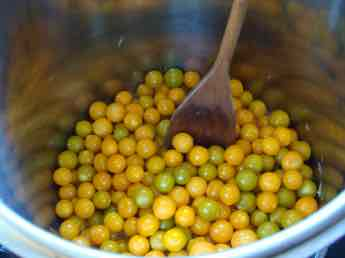 Cape gooseberries in pot.