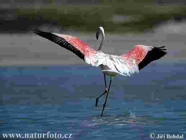 Ultimately the flamingo must learn to fly rather than walk the lonely road of faith.