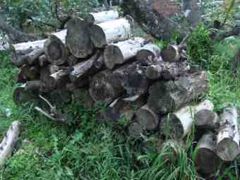 Log pile that needs splitting before burning in a woodstove.