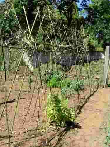Pole bean fence