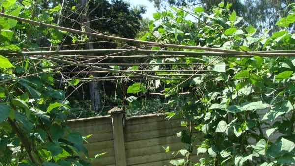 Trellis cross bracing