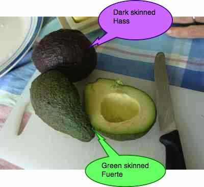 Avocado fat along with olives is the best.
