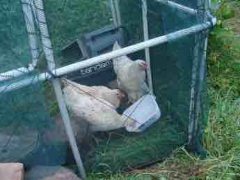 Chicken tractor nesting box.