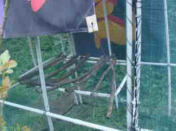 Chicken tractor strong roost