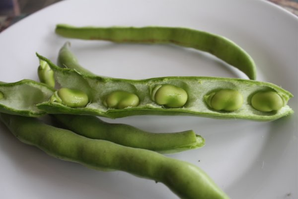 Green fava beans in shells.