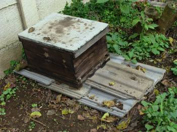 Honey bee hive with brood chamber only.