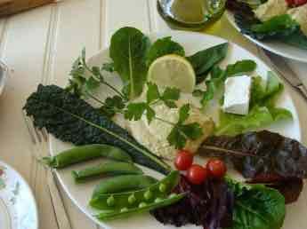 Lettuce lunch