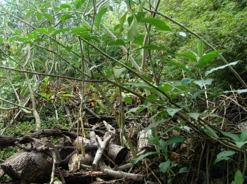 Starting bees in an apiary may mean first clearing back the jungle.