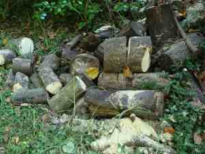 Logs for the woodstove can often be harvested from the larger garden.