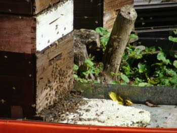 This hive can be dangerous; be careful.